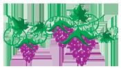 Olej z pestek winogron na włosy - garść informacji.